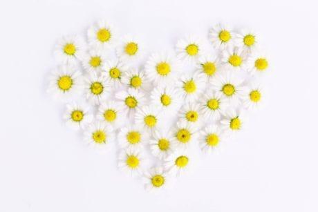 daisy-1535532_1280